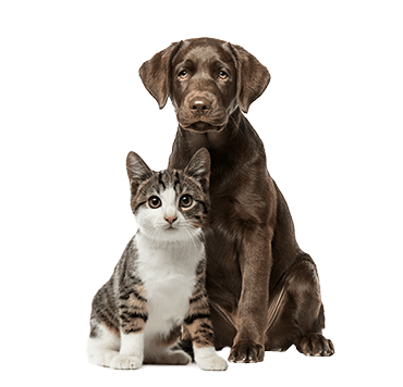 cat and dog sitting next to each other